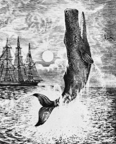 Moby Dick from Herman Melville 's 'Moby-Dick'. Novel about search for a whale. American author and poet, 1 August 1819 – 28 September 1891. (Photo by Culture Club/Getty Images)